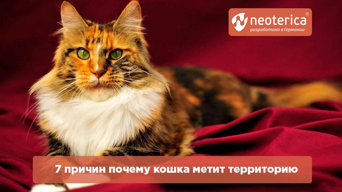 Кошка метит территорию, что делать?