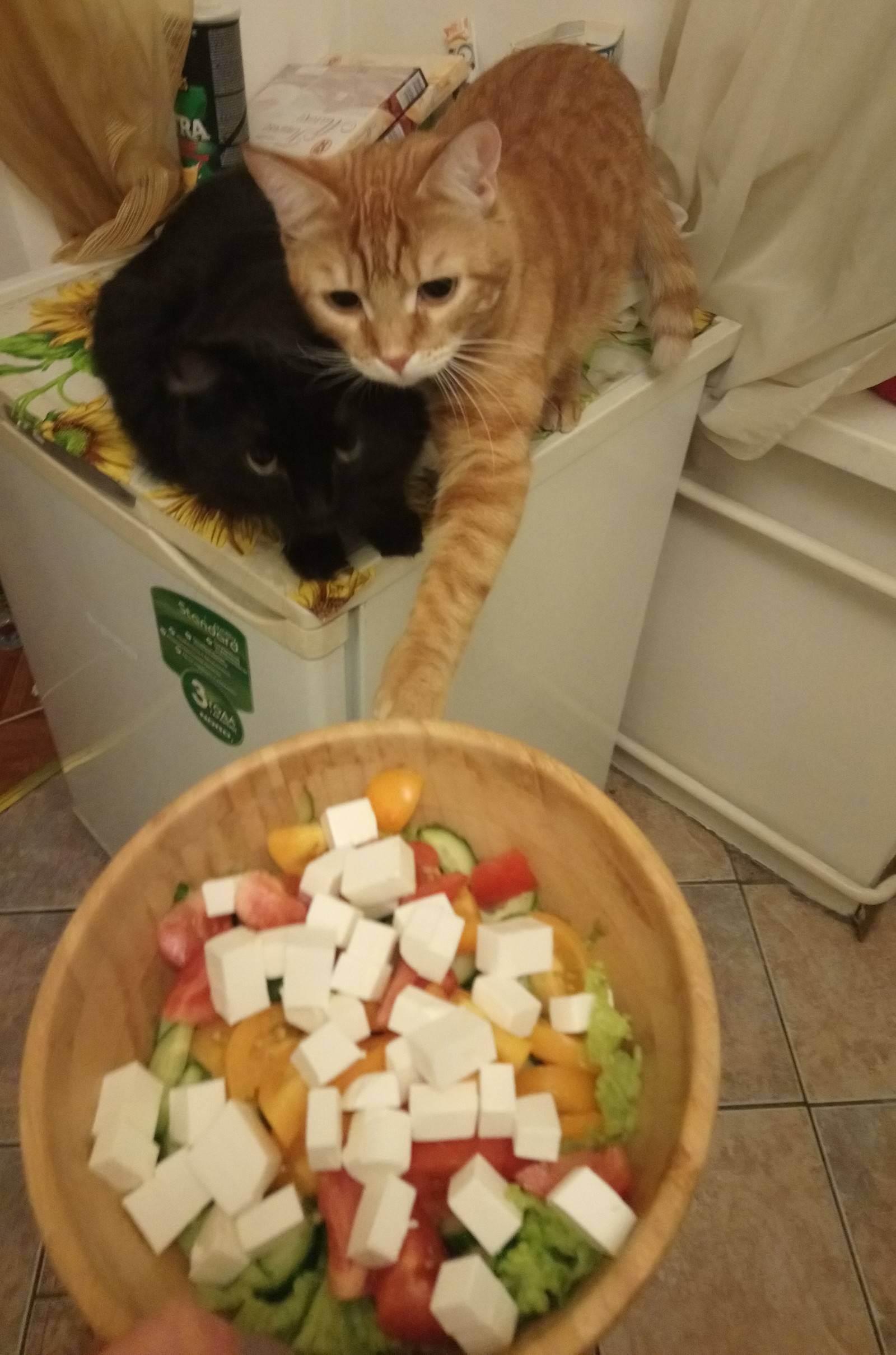 Чем кормить шотландских вислоухих кошек?