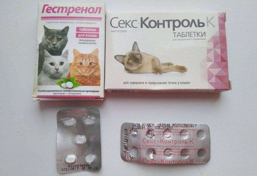 ᐉ противозачаточные средства для кошек – контрацептивы для котов - zoomanji.ru