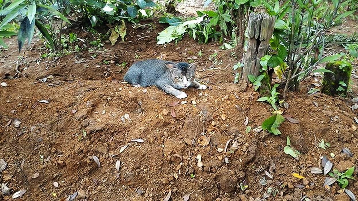Как похоронить кота зимой - что делать, если в дом пришла беда