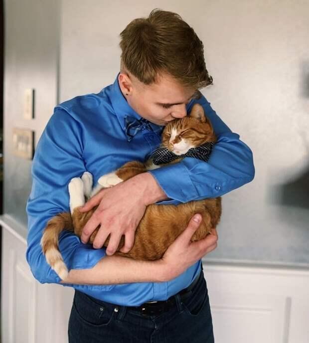 Две кошки в доме плюсы и минусы. кошка в доме: плюсы и минусы