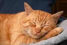 Сонник кошки совокупляются. к чему снится кошки совокупляются видеть во сне - сонник дома солнца
