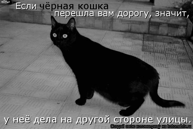 На счастье или на беду: все приметы о черной кошке