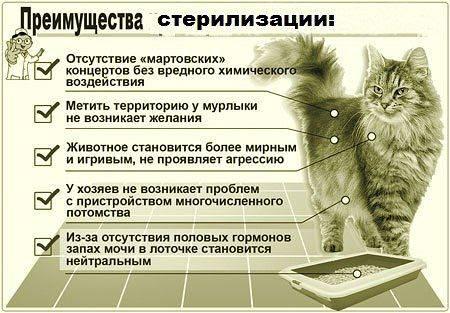 Виды, способы и методы кастрации котов: необходимые знания для владельцев