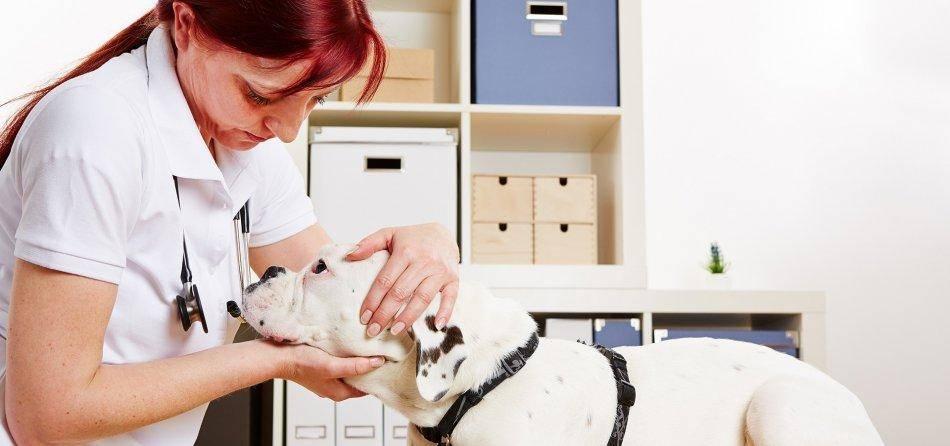 Эпилепсия у кошек: формы, симптомы, лечение эпилепсия у кошек: формы, симптомы, лечение