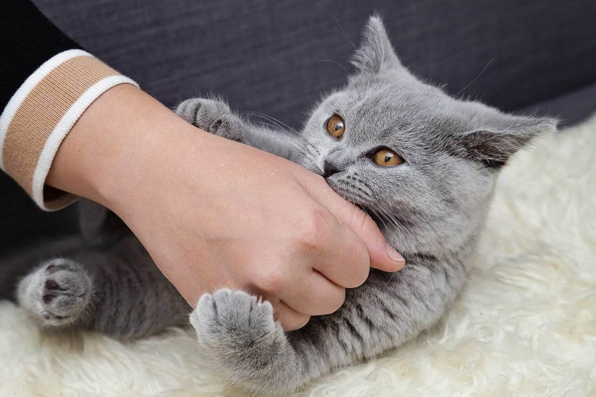 Koshka-ne-kakaet - запись пользователя елена (vagenka) в сообществе домашние животные в категории болезни любимцев - babyblog.ru