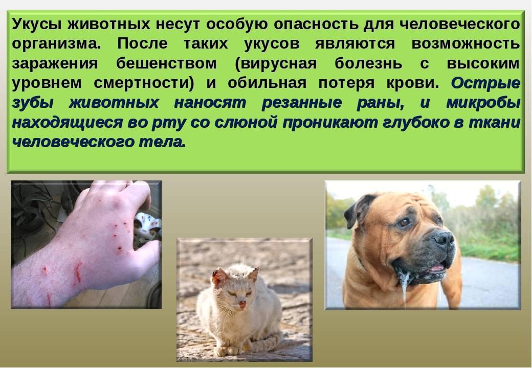 Что делать, если кота укусила оса? | zdavnews.ru