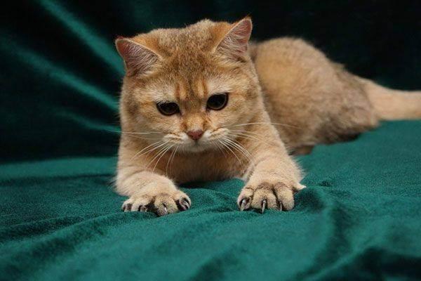 Антицарапки для кошек: отзывы