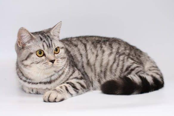 «лицо» торговой марки whiskas и другие «звёзды» кошачьих реклам