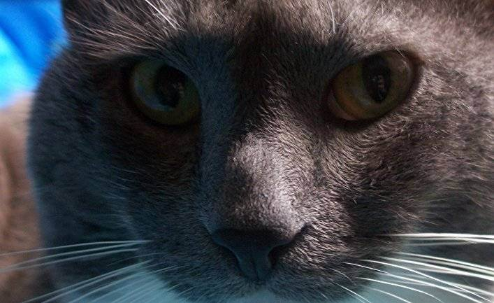 Как понять, что кошка любит хозяина?