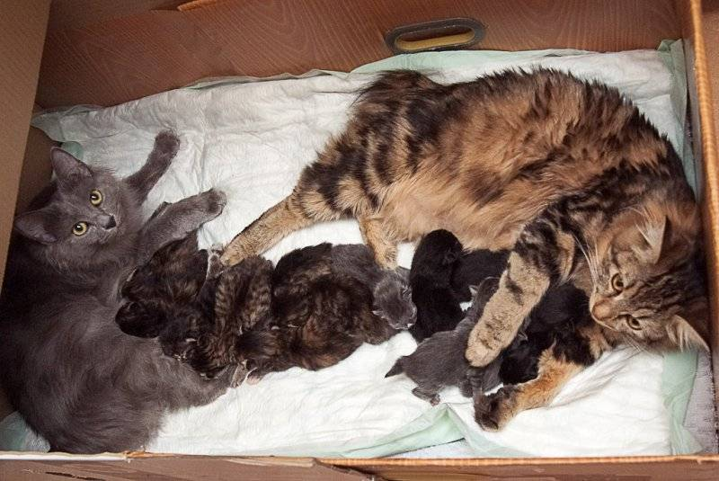 Как подготовиться к родам кошки, что необходимо иметь под рукой