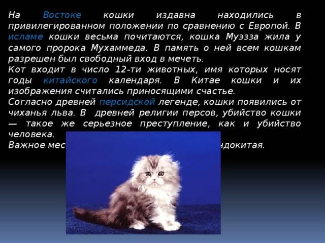 Большой серый кот