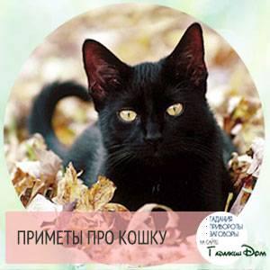 В чем уникальность трехцветной кошки и кота, приметы о них