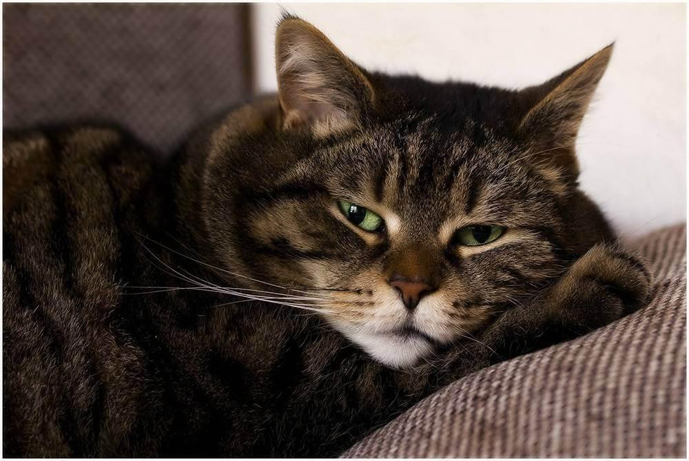 Болезни и лечение кошек