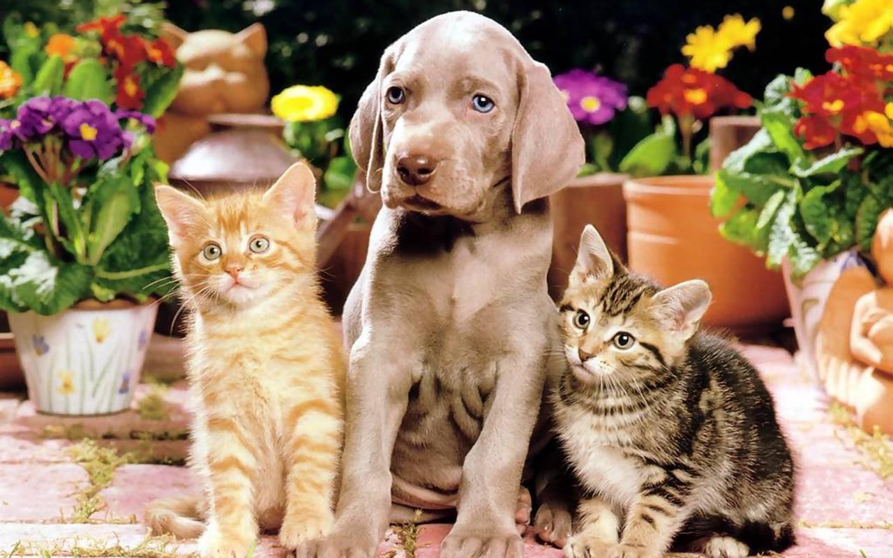 Примеры самых ласковых и добрых пород котов, варианты ленивых и ручных для детей