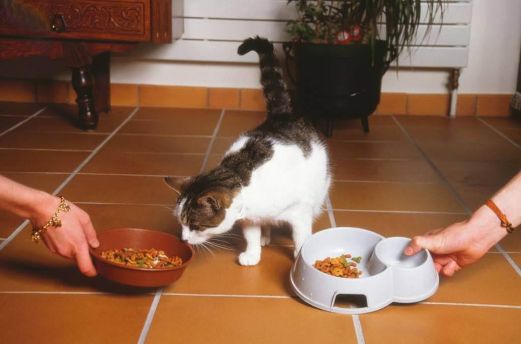 Как отучить кошку от корма и приучить к домашней еде: правила перевода животного на натуральную пищу