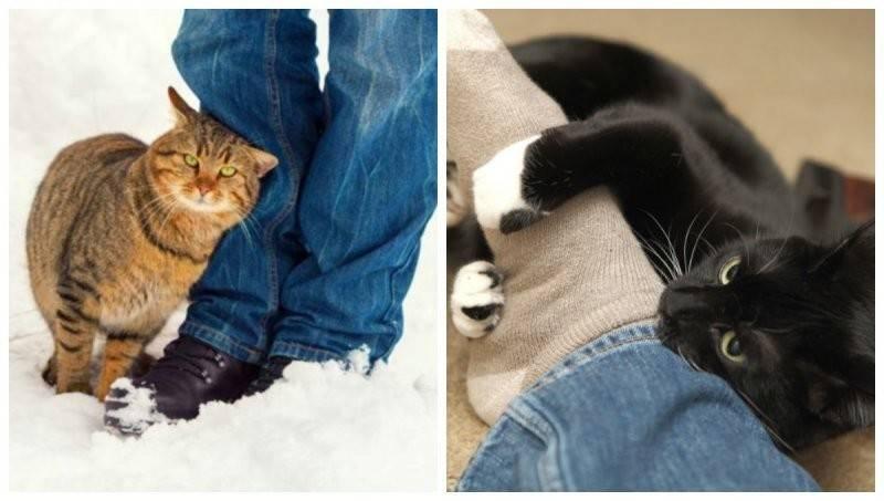 Почему кот лижет хозяина