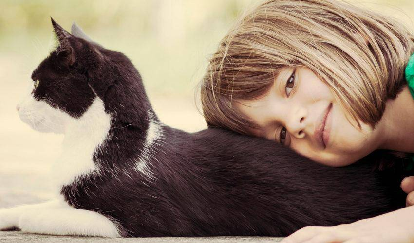 Аллергия у кошек: симптомы и лечение препаратами по признакам
