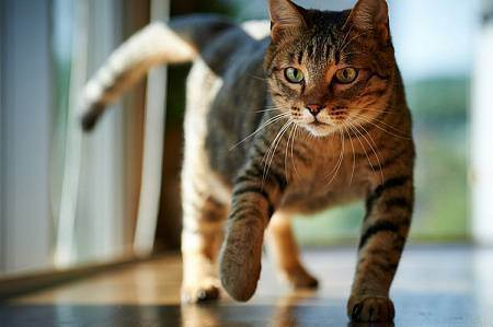 Вредная и полезная еда для кошек. что нужно исключить из кошачьего меню?