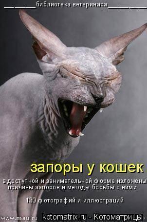 Запор у кошки: виды, симптомы, причины, лечение