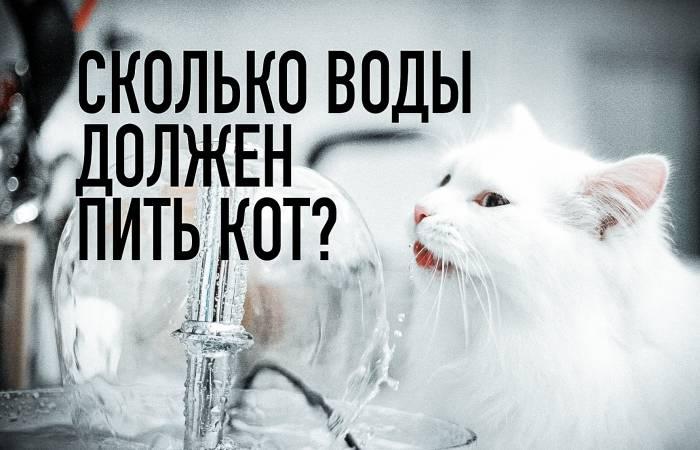 Сколько раз в день кормить кошку — натуральное и промышленное кормление
