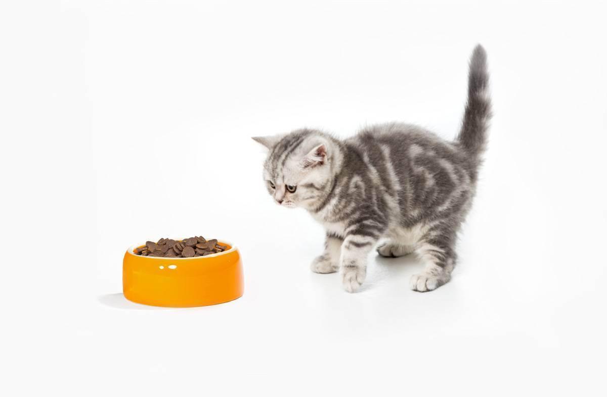 Котенок плохо ест: почему, что делать, стоит ли беспокоиться? почему маленький котёнок вдруг стал плохо кушать