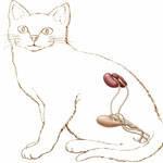 Заболевания почек у кошек собак   фитоэлита здоровые почки