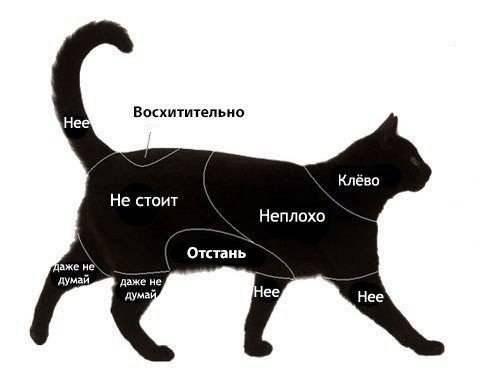 Как правильно гладить кошку: где можно и нельзя гладить кота