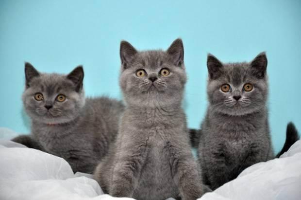 Прививки котенку