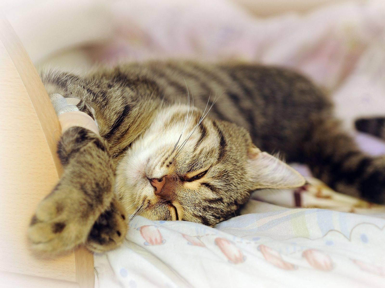 Кот спит на спине, раскинув задние лапы, кошка катается по полу и мяукает – почему и что это значит?
