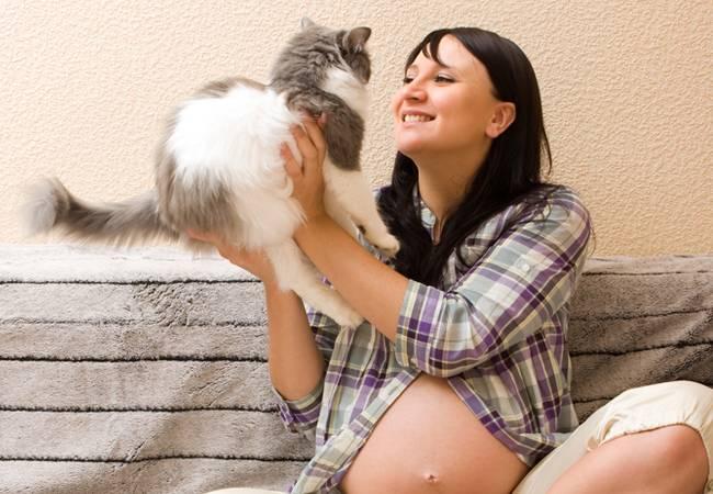 Чувствуют ли кошки беременность хозяйки: реакция домашних животных, особенности, интересные факты
