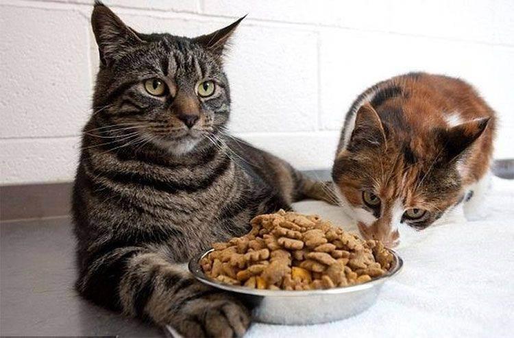 Кормление кошек натуральной едой: чем кормить питомца в домашних условиях, что можно и чего нельзя давать?