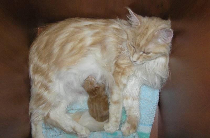 Диарея у кошки: причины поноса, методы лечения и профилактика