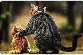Как приручить кошку