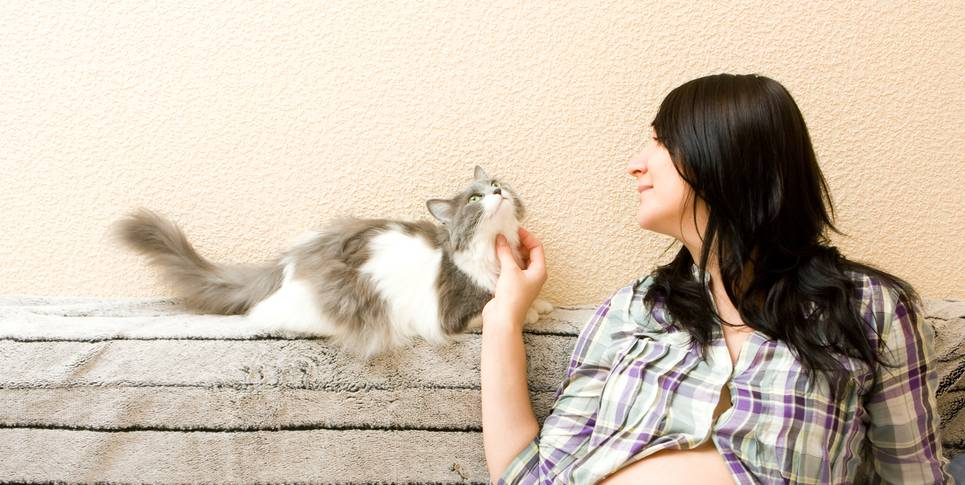 Почему беременным нельзя гладить кошек и чем это грозит?