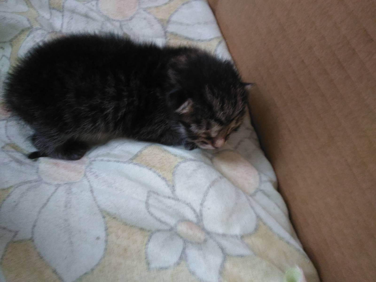 Поведение кошки после родов: важные моменты