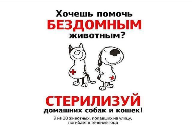 Кастрировать – нельзя – помиловать! зачем нужна кастрация животных?