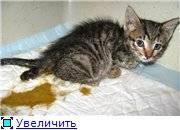 Рахит у кошек - причины и методы лечения