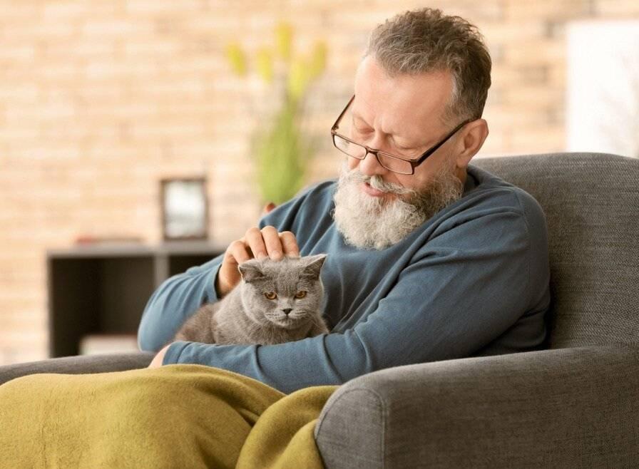 Болезнь много кошек - муркин дом