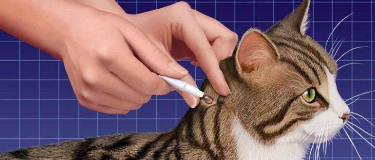 Наилучшие средства от блох для кошек и котят