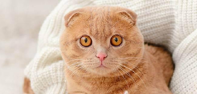 Лучший возраст для стерилизации кошки: плюсы и минусы периодов