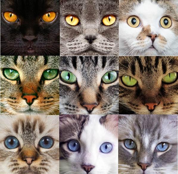Как самому определить возраст котенка по внешнему виду