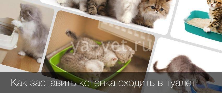 Сколько кошка может не ходить в туалет после операции | my darling cats