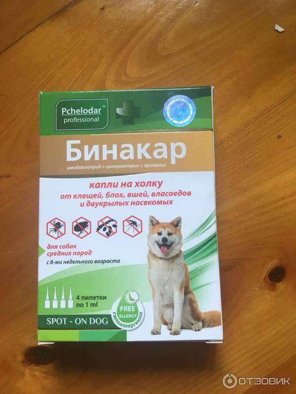 Стоит ли применять капли от блох и глистов для кошек?
