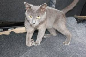 Перелом хвоста у кошки лечение дома
