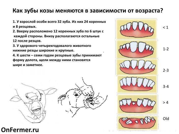 Зубы у кошек: заболевания и уход