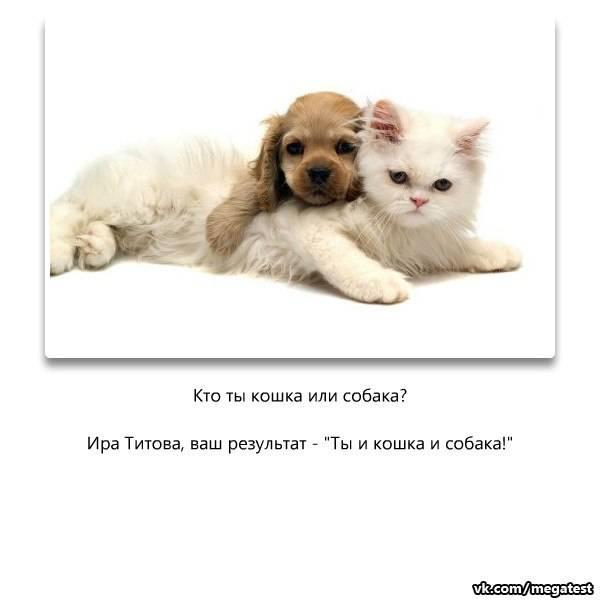 Хвостатые эрудиты: кто умнее — коты или собаки