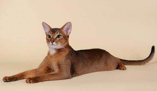 Разнообразие пород кошек и котов