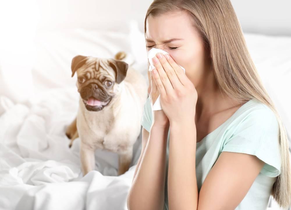 Как избавиться от аллергии на кошек - симптомы и лечение аллергии