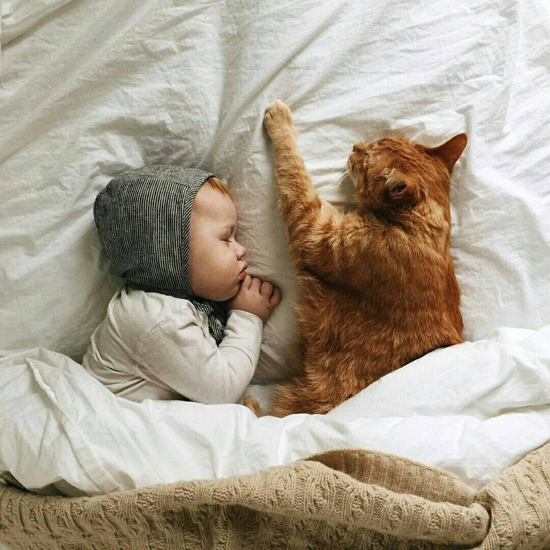 Что надо знать, когда в доме маленький ребенок и кошка - статья сайта о детях imom.me